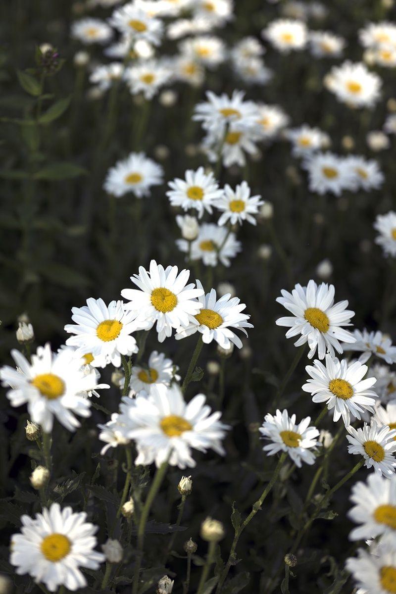 Gartenpflanzen Pflegeleicht Genial Pflanzen Für Trockene Und sonnige Standorte Blumen