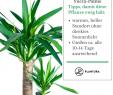 Gartenpflanzen Pflegeleicht Luxus Die 10 Kaum Zu Tötenden Pflanzen Vivero