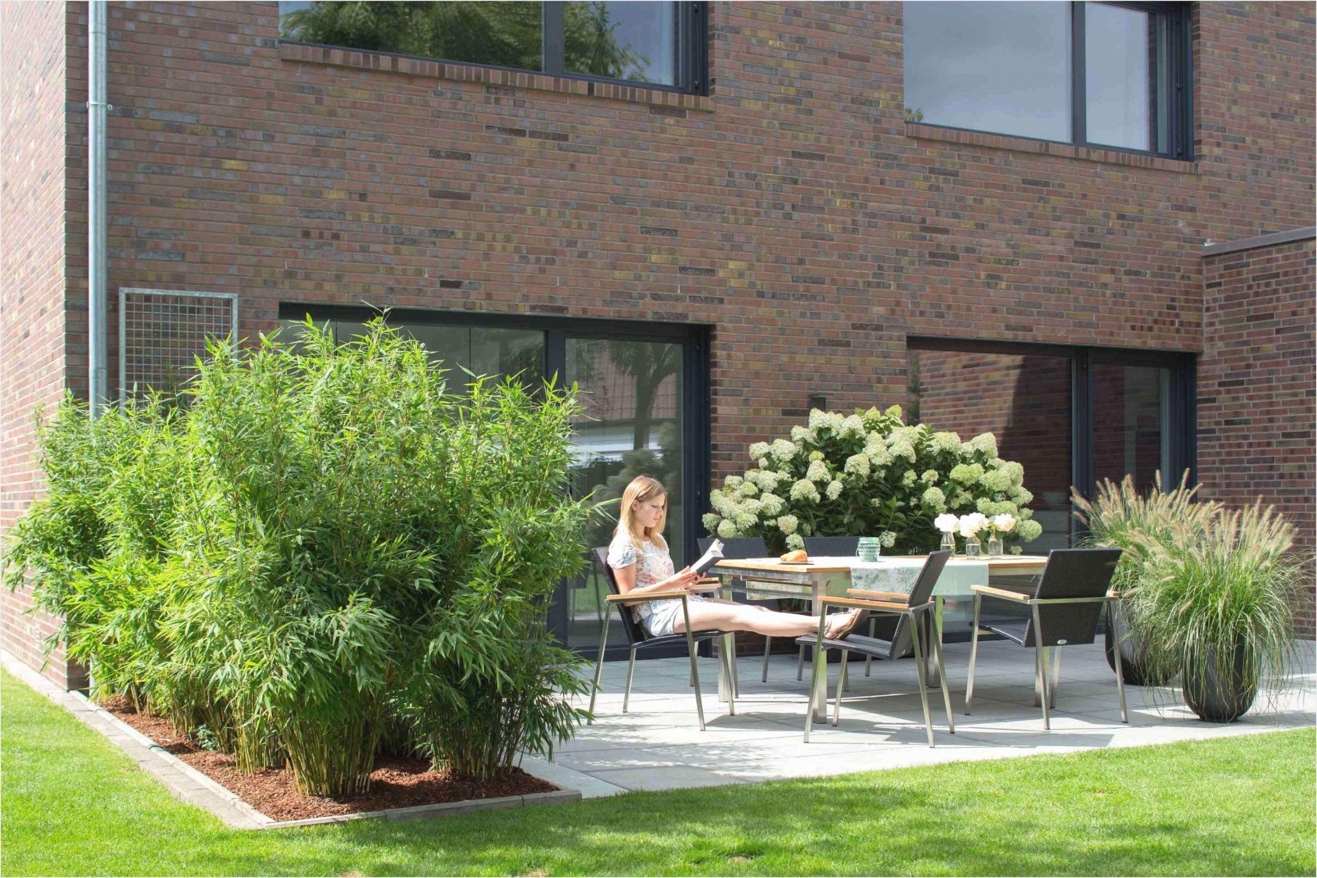 42 neu sichtschutz pflanzen terrasse foto pflanzen fur sichtschutz pflanzen fur sichtschutz