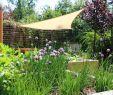 Gartenpflanzen Pflegeleicht Neu 59 Das Beste Von Wohnzimmer Pflanze Groß Das Beste Von