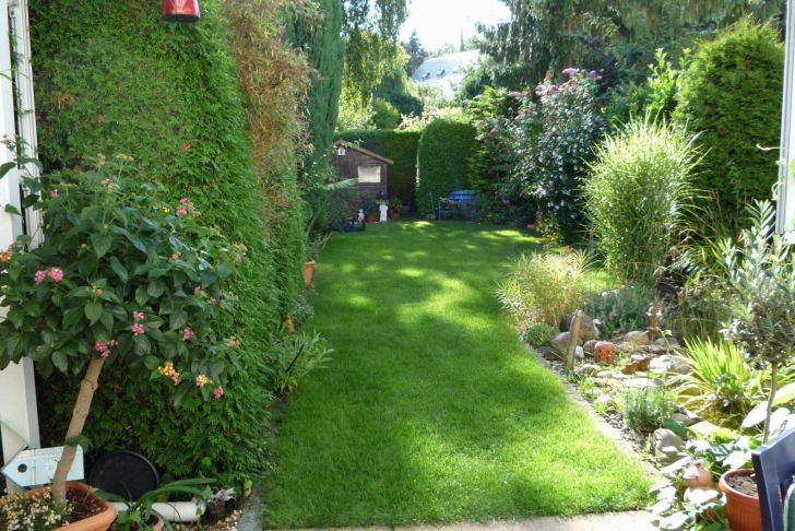 Gartenpflanzen Pflegeleicht Neu Pflanzen Für Sichtschutz — Temobardz Home Blog