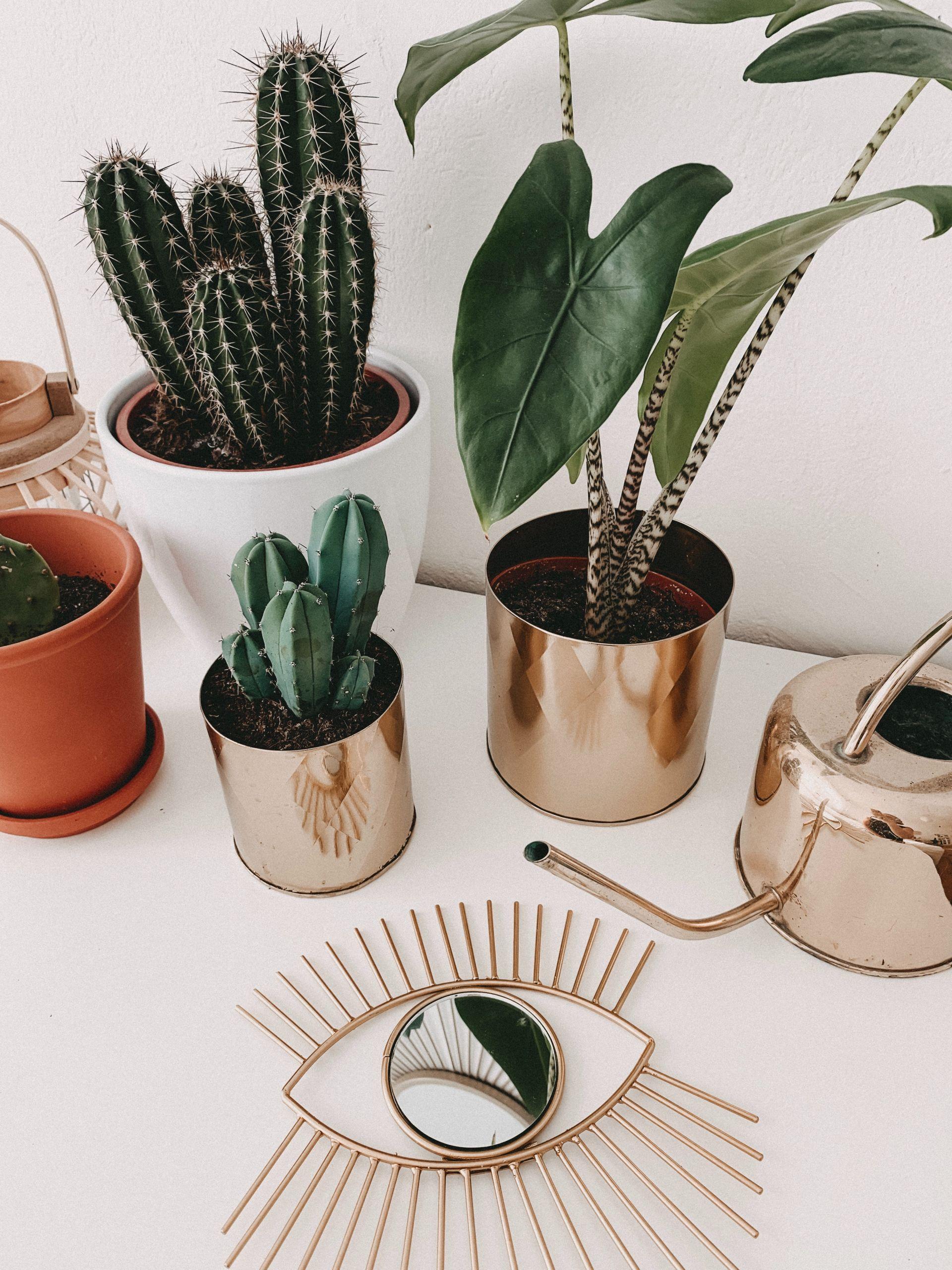 Gartenpflanzen Pflegeleicht Schön Diese Stylischen Pflanzen Sind Besonders Pflegeleicht