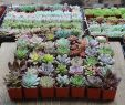 Gartenpflege Inspirierend Succulent Shops are Fun and All but Nothing Beats Plant Mail