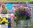 Gartenplaner Online Best Of Calaméo Mein Para S 1 2019 Haubensak