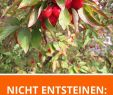 Gartenshop Online Elegant Mara De Bois Fragaria X Ananassa Garten