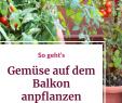 Gartensitzplatz Ideen Luxus Gemüse Auf Dem Balkon Anpflanzen Diese 5 sorten Sind
