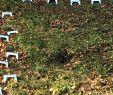 Gartenskulpturen Schön Pin Auf Hangstufen In Der Praxis