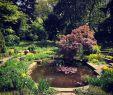 Gartenstauden Einzigartig Hashtag Gartenstauden Na Twitteru