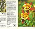 Gartenstauden Luxus Gartenstauden Beschreibung Vermehrung Anzucht Pflanzung Und Pflege Mehrjähriger Gartenblumen