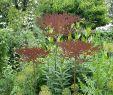 Gartenstecker Rost Best Of Hashtag Doldenblütler Na Twitteri