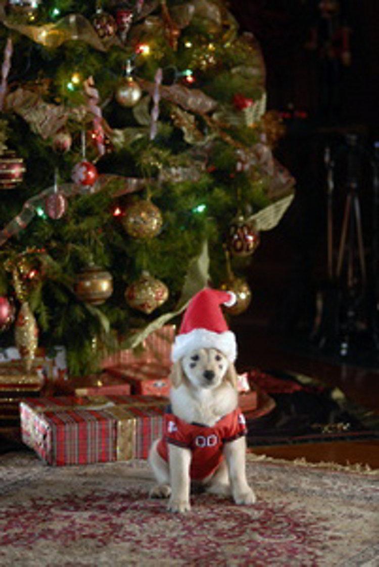 santa bud s auf der suche nach santa pfote
