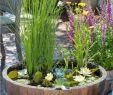 Gartenteich Frisch Diy Mini Teich Im topf Und Noch Viele tolle Gartenideen Für