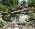Gartenteich Gestalten Best Of Einen Teich Anlegen Iamrvrb