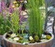 Gartenteich Gestalten Inspirierend Miniteich Anlegen Wasserlilien Fass Roehricht Outdoor