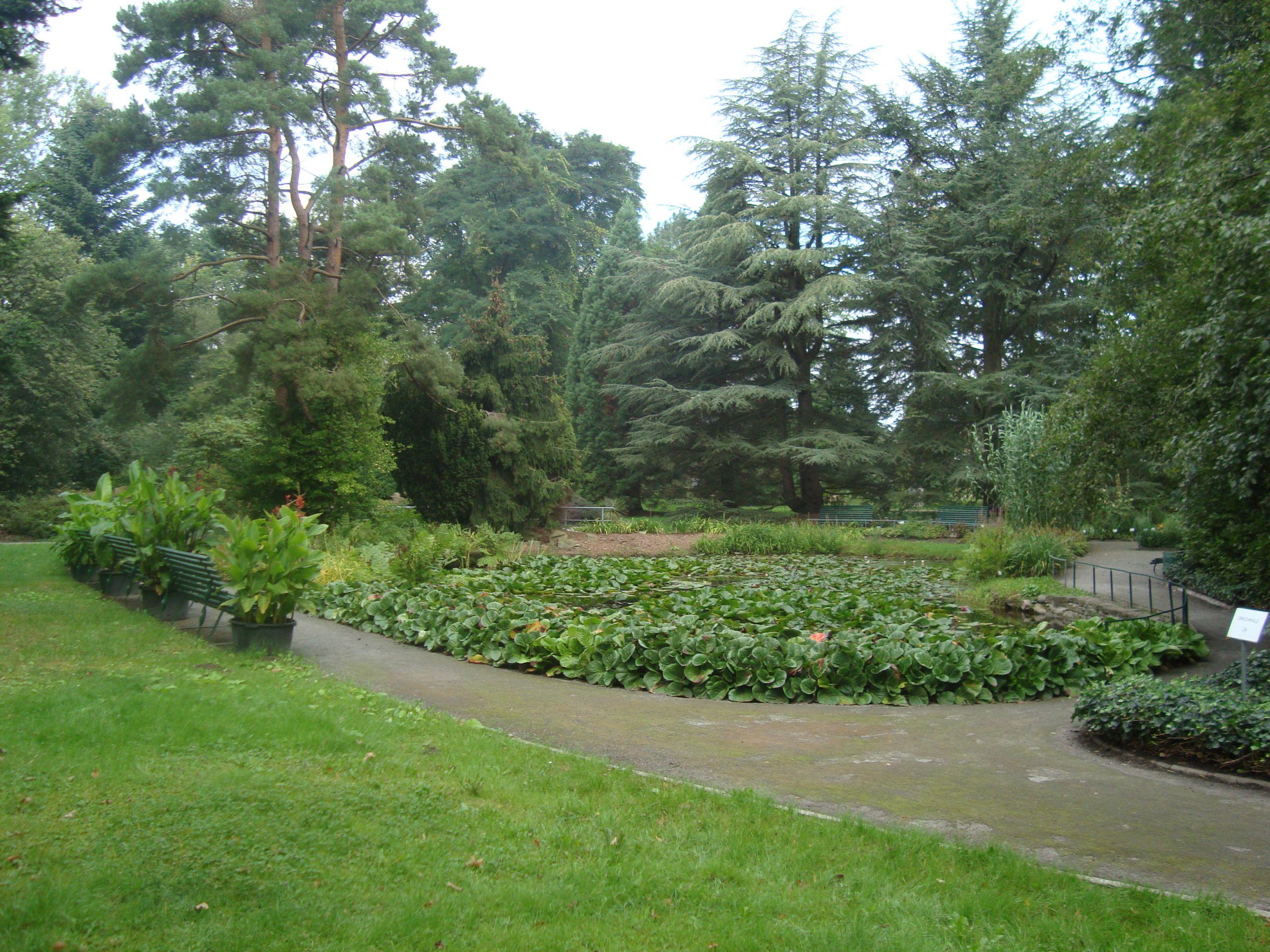 Greifswald Arboretum Teich JPG