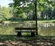 Gartenteich Schön File Sustrum Moor Teichstraße Lagerteich 05 Ies