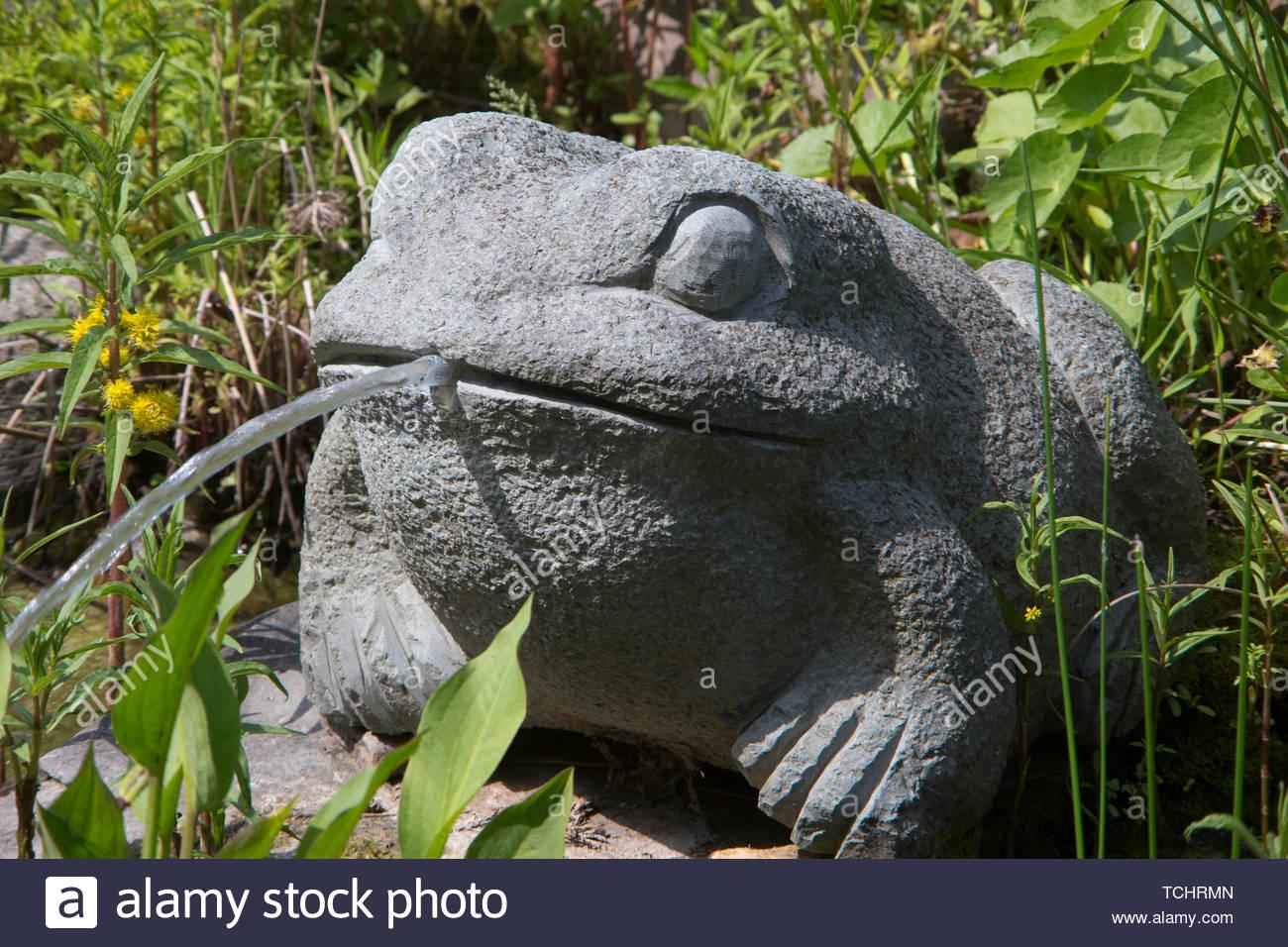 wasserspeiernder frosch am gartenteich TCHRMN