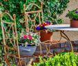 Gartentiere Deko Neu so Gelingt Erfolgreiche Gartengestaltung 🥇 Haus Garten