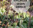 Gartentiere Deko Schön Die 222 Besten Bilder Von Garten Tiere Mit Der Natur