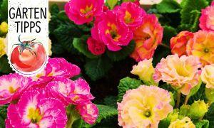 24 Einzigartig Gartentipps