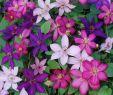 Gartenumrandung Ideen Best Of Garten
