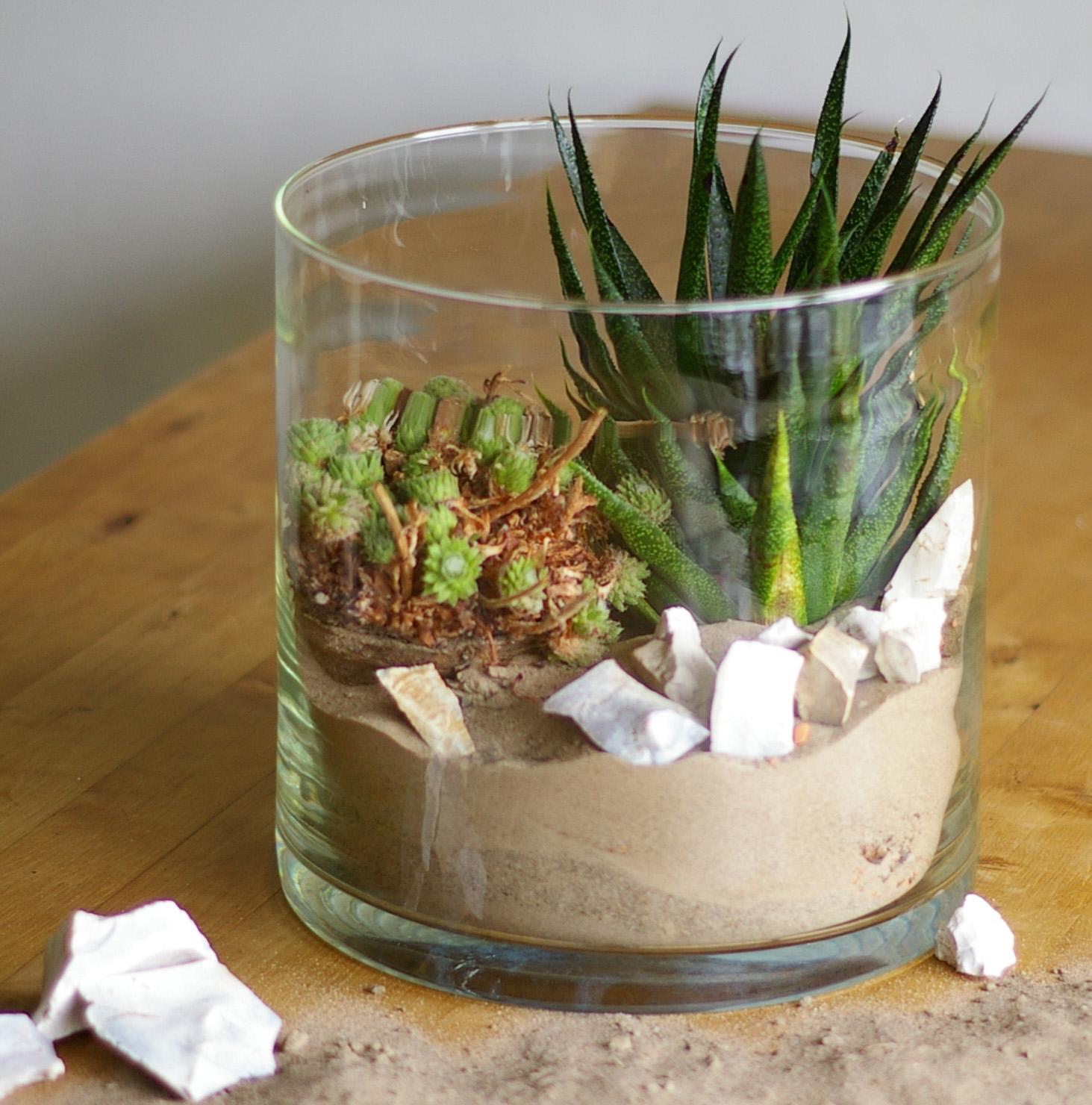pflanzen im glas mit sand