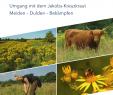 Großen Garten Pflegeleicht Gestalten Luxus Pdf Umgang Mit Dem Jakobs Kreuzkraut Meiden Dulden