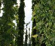Große Gärten Gestalten Frisch Schokolade Gmbh Co Kg