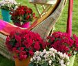 Großen Garten Gestalten Elegant Haus Innen Vektor Pflanzen Und Natur Hausgemachte Blumen Im