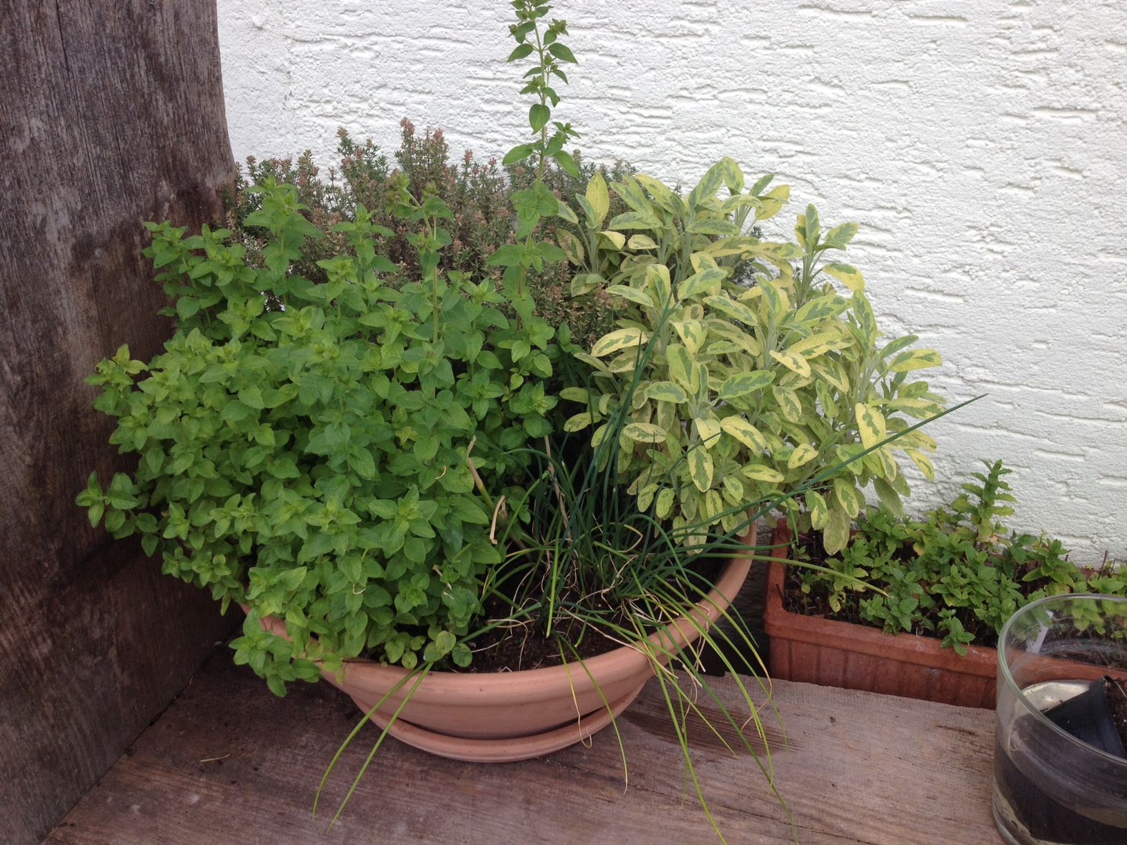 umpflanzen von kleinen topfpflanzen native plants garten fur blumen im topf pflanzen kraeutertopf