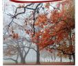Grundstück Gestalten Inspirierend Rm Magazin Nov 17 by Regional Magazin issuu