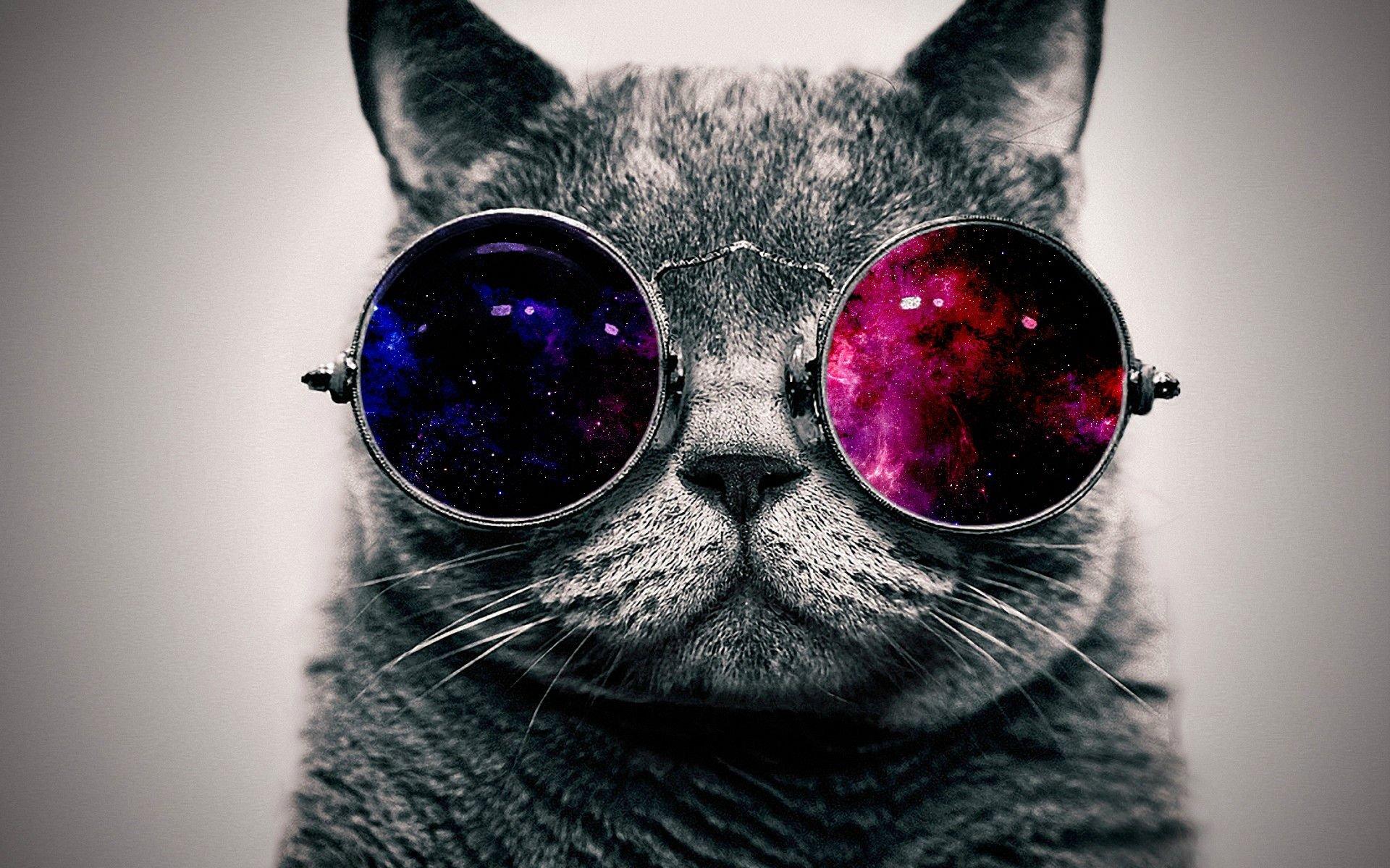cat galaxy glasses