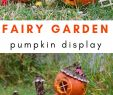 Halloween Bastelideen Luxus Pumpkin Fairy Garden for Halloween Display