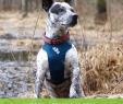 Deko Hund Garten Neu Die 282 Besten Bilder Von Hund 010