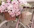 Gartendeko Fahrrad Frisch 661 Best Bikes and Baskets Images