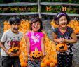 Halloween Mädchen Kostüme Einzigartig Happy Halloween From Boston Ma