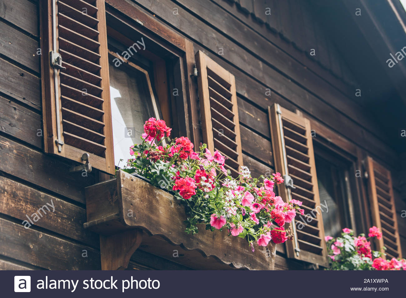pink flowers decoration at wooden windows with shutters 2A1XWPA