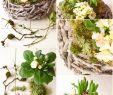 Hauseingang Deko Luxus Diy Frühlingskorb Natürlich Dekoriert