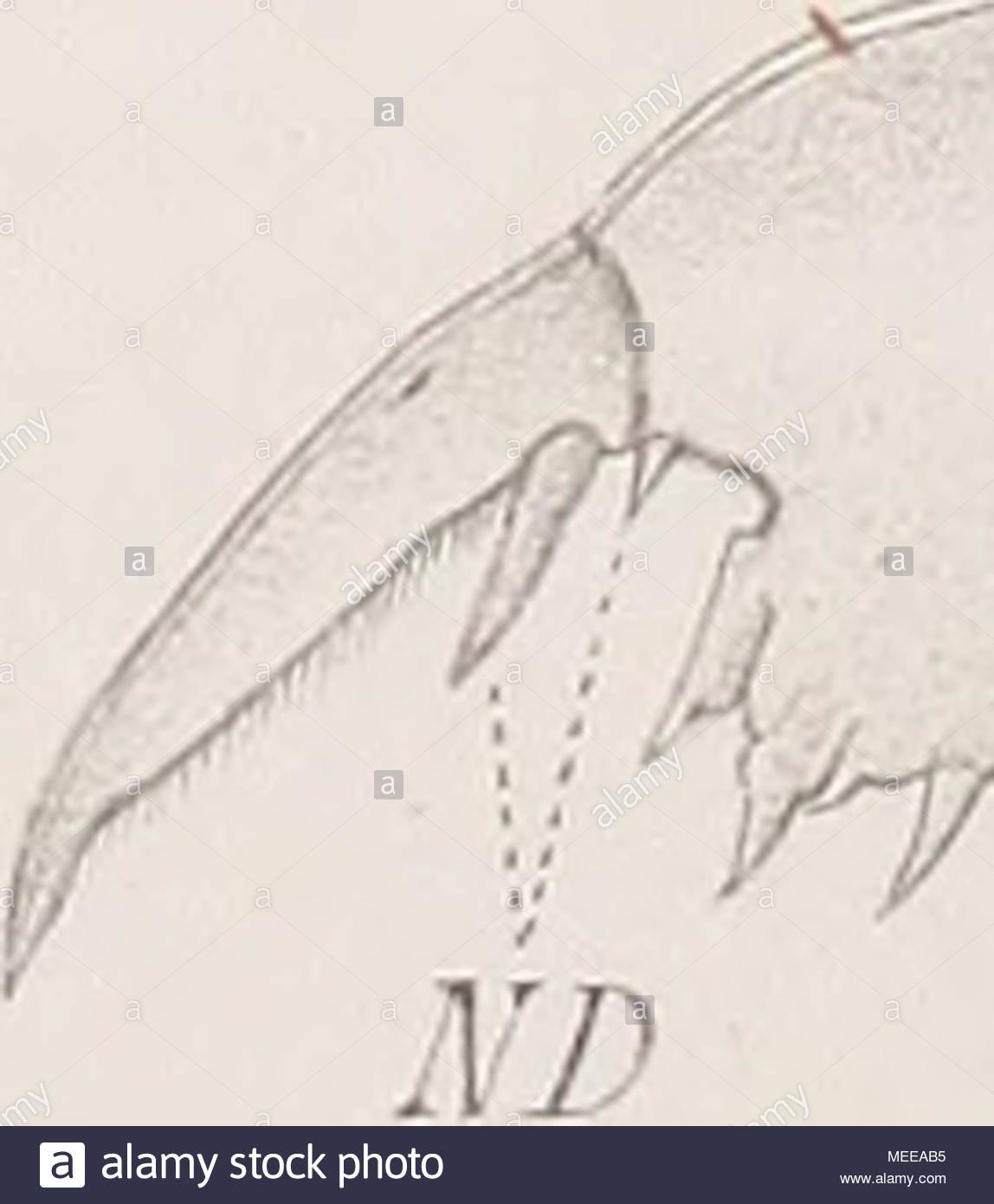 cladoceren der umgebung von basel ytr lin kl thstinqelin MEEAB5