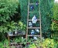 Holzleiter Deko Garten Best Of Ein Garten Wie Aus Der Gartenzeitschrift