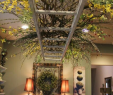 Holzleiter Deko Garten Einzigartig Pin Von Maria T Stuber Auf Lampen & Lichter & Co