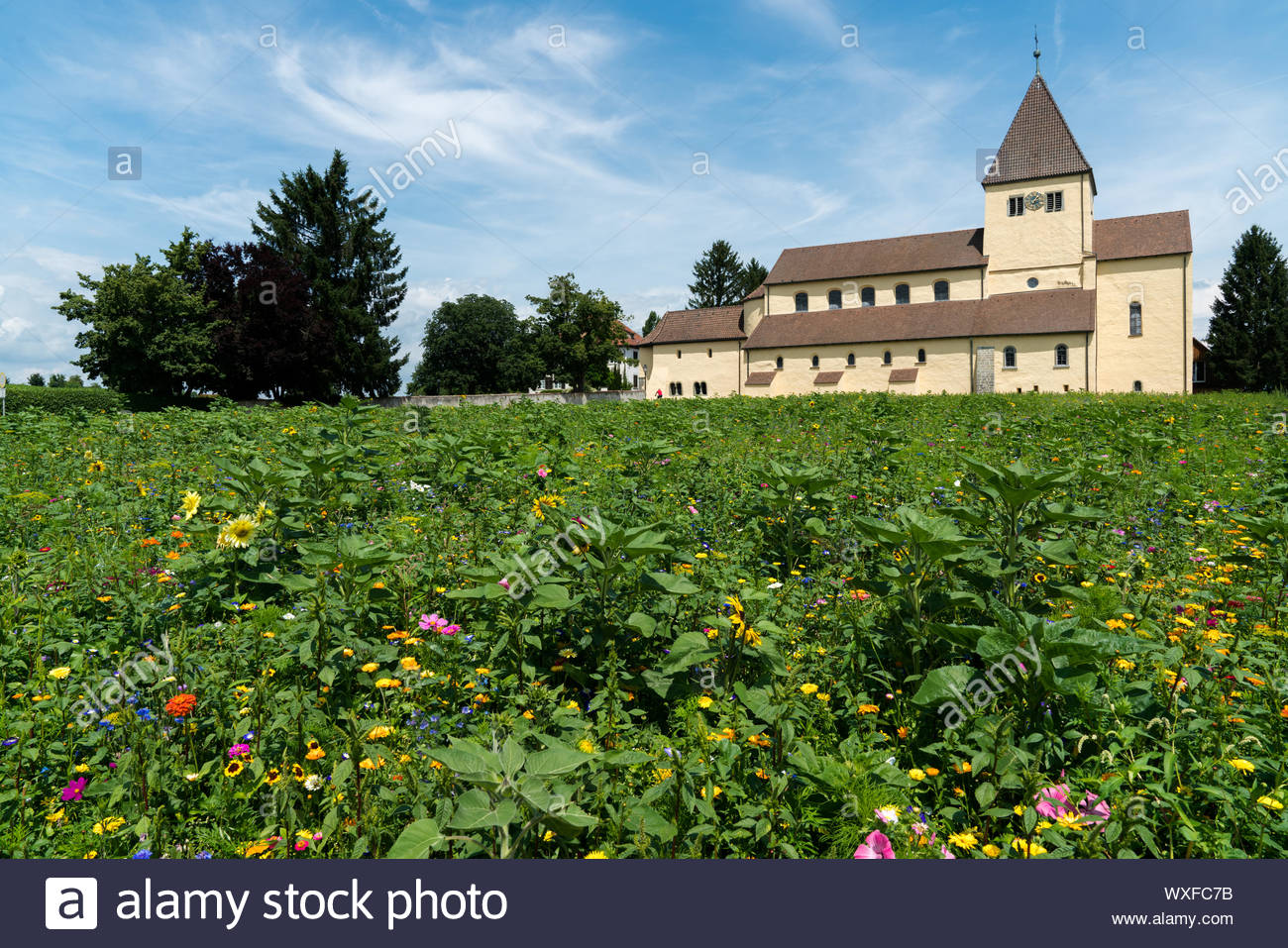 the church of st georg on reichenau island on lake constance with colorful wildflowers WXFC7B
