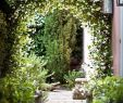 Idee Garten Frisch Gorgeous Front Yard Courtyard Landscaping Ideas 4