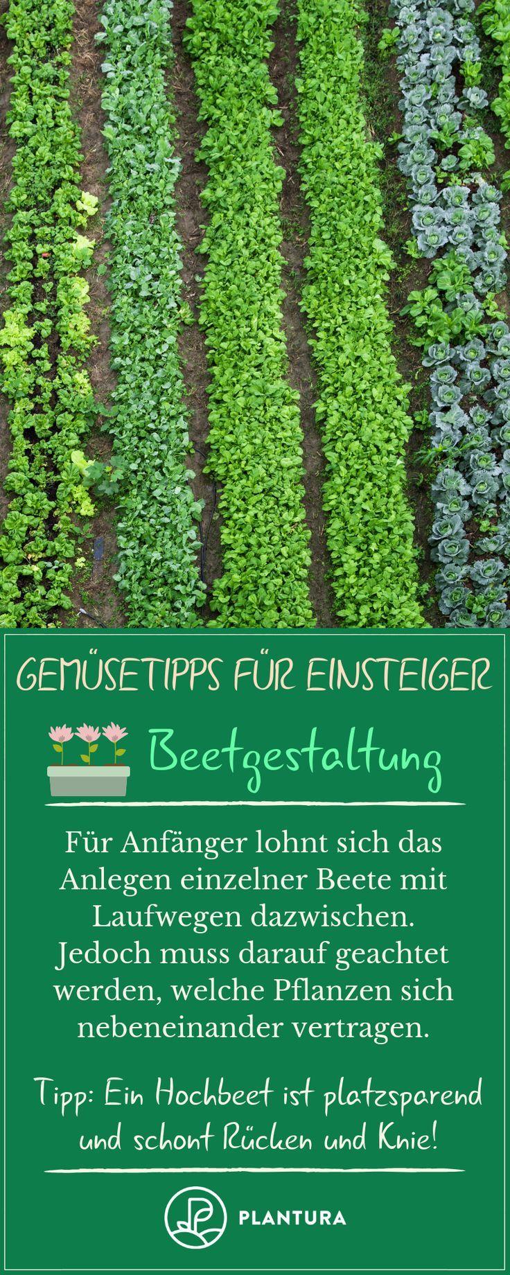 Ideen Beetgestaltung Einzigartig Gemüseanbau 10 Tipps Für Einsteiger Gemüsegarten