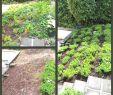 Ideen Für Gartengestaltung Einzigartig 35 Luxus Ideen Für Garten Genial