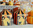 Ideen Halloween Party Schön Halloween Ideas for Kids – Cute Pumpkin Party