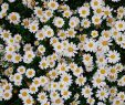 Japan Garten Deko Best Of ʟɪᴋᴇ ᴡʜᴀᴛ ʏᴏᴜ Sᴇᴇ ғᴏʟʟᴏᴡ ᴍᴇ ғᴏʀ ᴍᴏʀᴇ