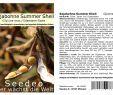 Keimzeit Saatgut Elegant 30 Samen Bio Ca Seedeo sojabohne Summer Shell Glycine Max