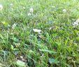 Keimzeit Saatgut Schön Rasen Keimzeit Wie Lange Keimt Der Rasen