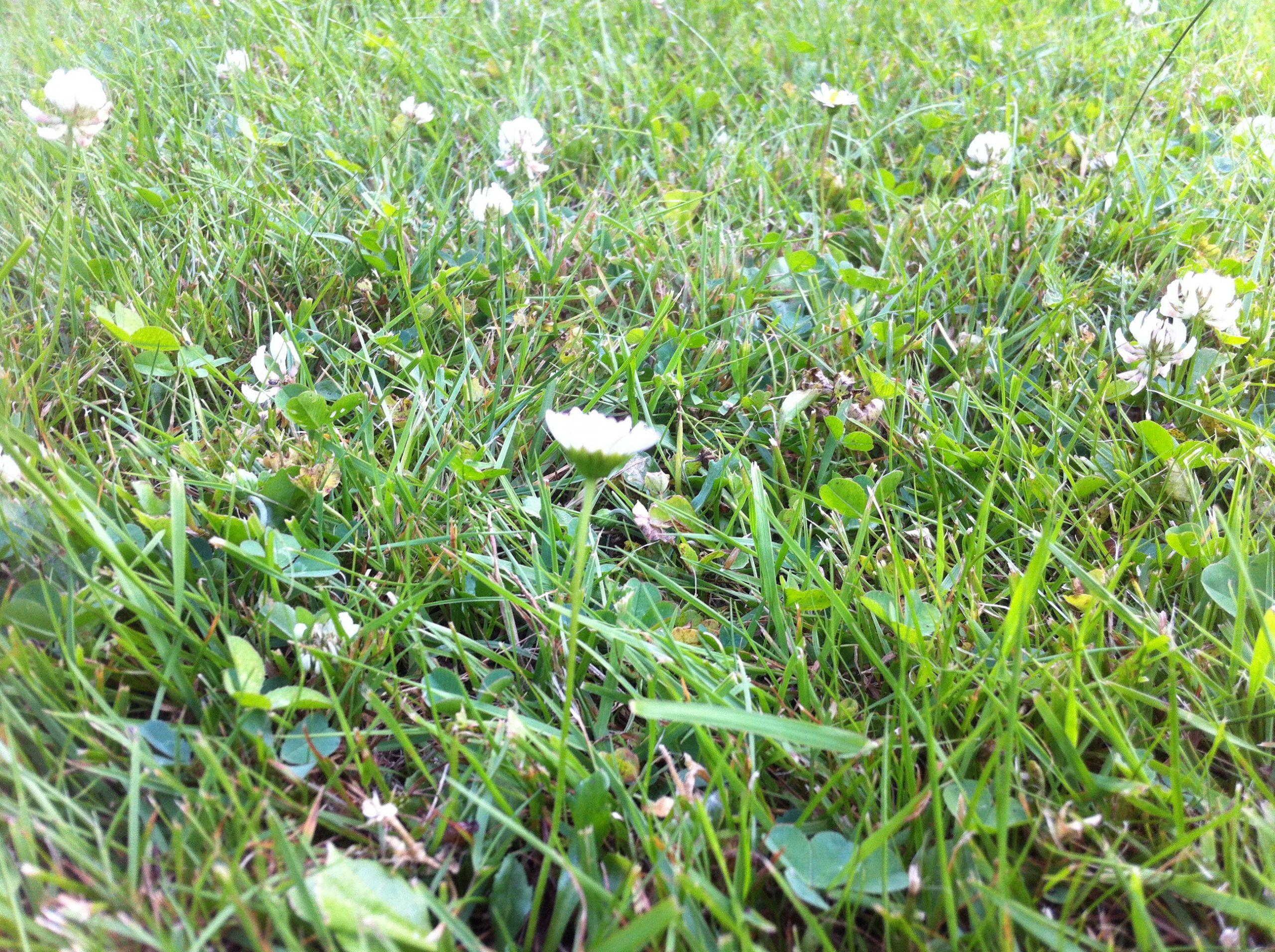 Rasen Keimzeit Wie lange keimt Rasen